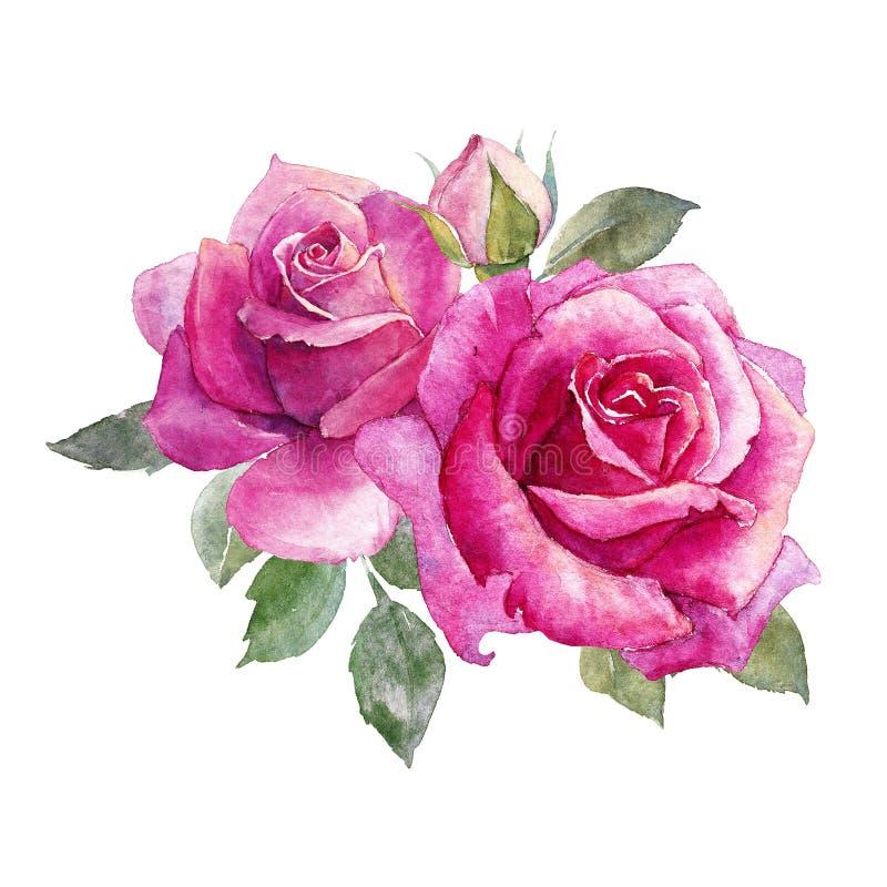 Composición de las rosas de la acuarela stock de ilustración