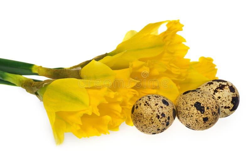 Composición de los huevos de Pascua, narcisos de las flores imagen de archivo libre de regalías