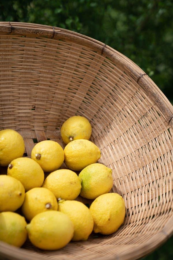 Composición de los limones que fijan en cesta en fondo del material de la escena ligera natural/de la comida/de la comida/fotogra imagenes de archivo
