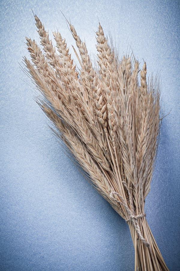 Composición de los oídos atados del centeno del trigo en fondo azul imagen de archivo libre de regalías