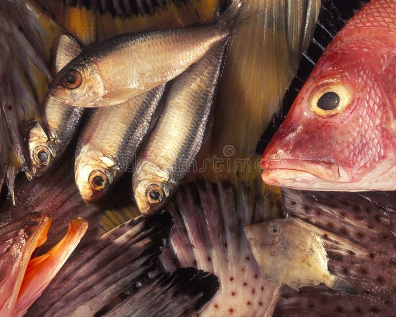 Composición de los pescados imagen de archivo libre de regalías