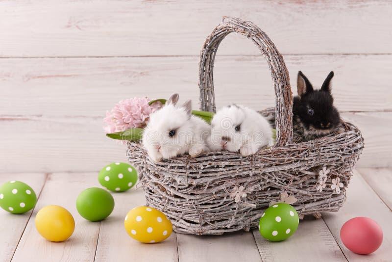 Composición de Pascua con los conejitos y los huevos pintados fotos de archivo