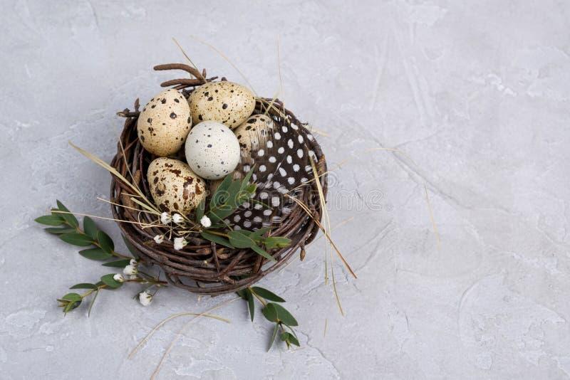 Composición de Pascua con los huevos de codornices en un nestOn un fondo concreto gris foto de archivo