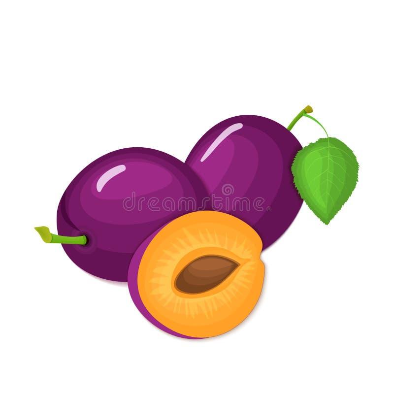 Composición de varios ciruelos El ciruelo púrpura del vector da fruto mirada apetitosa entera y de la rebanada Colorido sabroso d libre illustration