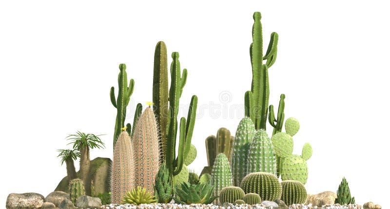 Composición decorativa integrada por los grupos de diversas especies de cactus, de áloe y de plantas suculentas aislados en el fo ilustración del vector