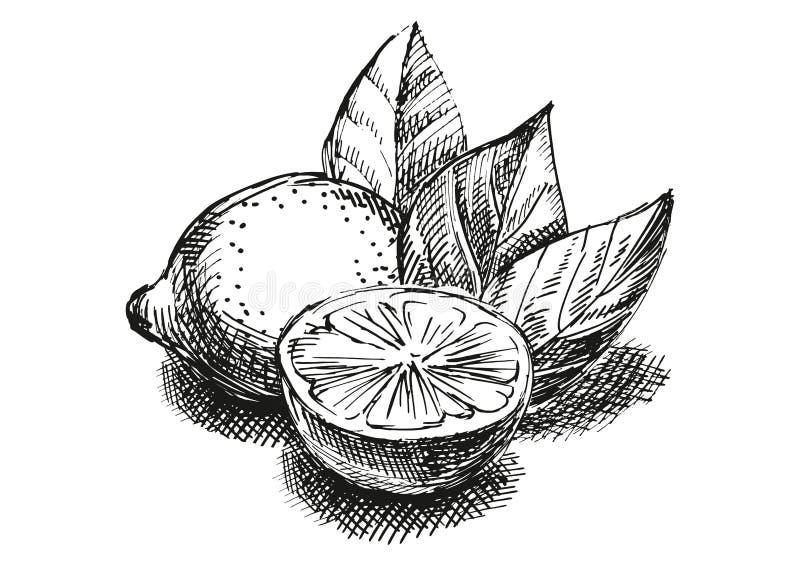 Composición del bosquejo con el limón fotos de archivo libres de regalías