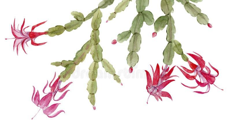 Composición del cactus de Schlumberger imagenes de archivo