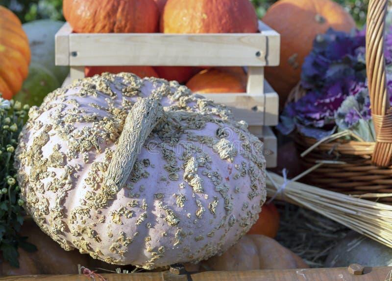 Composición del otoño con la calabaza blanca decorativa fotografía de archivo