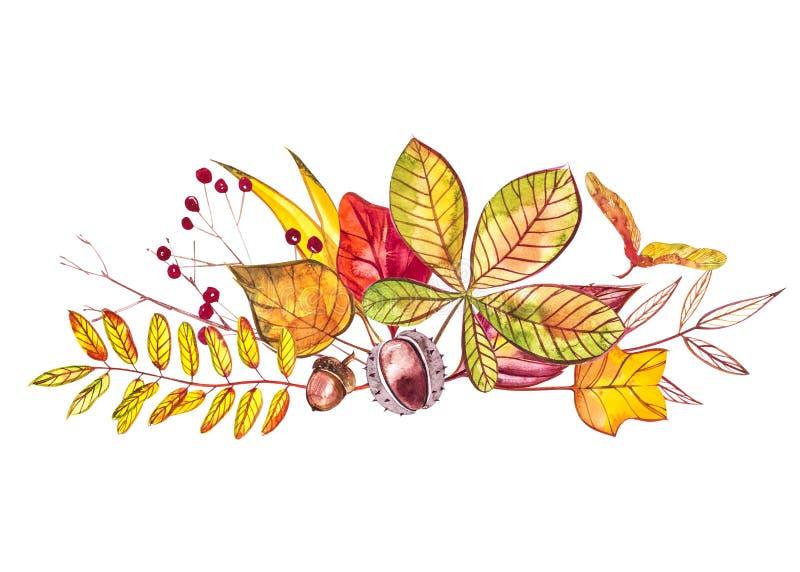 Composición del otoño Ejemplos hechos de bayas y de hojas del otoño en el fondo blanco Ilustraciones de la acuarela libre illustration