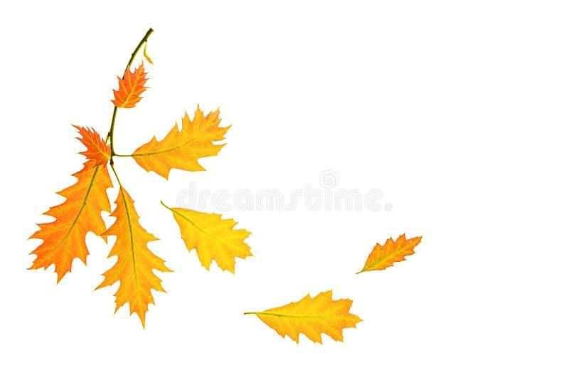 Composición del otoño hecha de hojas rojas amarillas en el fondo blanco, aislado fotos de archivo