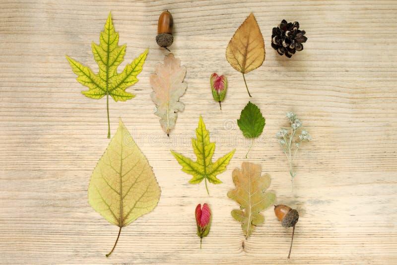 Composición del otoño Modelo de las bellotas, flores secadas, hojas de otoño, semillas, wildflowers en un fondo de madera Endecha fotografía de archivo libre de regalías