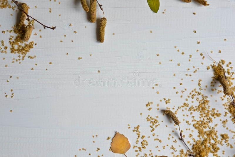 Composición del otoño Modelo hecho de las hojas secadas, ramas del abedul en el fondo de madera blanco Fondo plano del otoño Ende foto de archivo libre de regalías