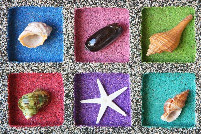 Composición del shell del mar foto de archivo