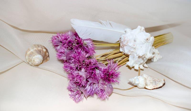 Composición del vintage con las flores, la pluma y los crustáceos secos rosados foto de archivo libre de regalías
