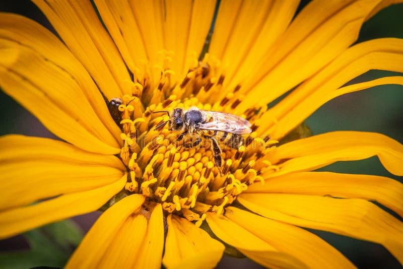 Composición en amarillo para una naturaleza muerta stock images