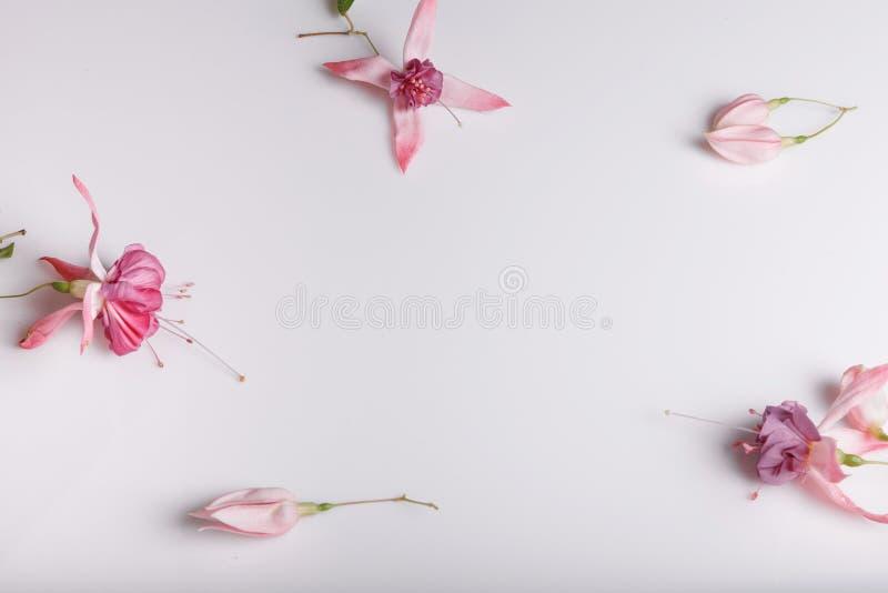Composición festiva de la flor en el fondo blanco Visión de arriba imagenes de archivo