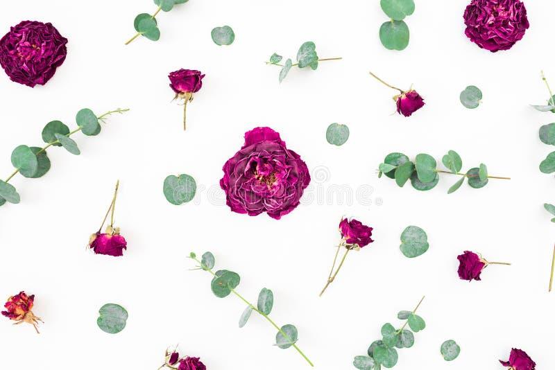 Composición floral de flores y de ramas rojas del eucalipto en el fondo blanco Endecha plana, visi?n superior foto de archivo