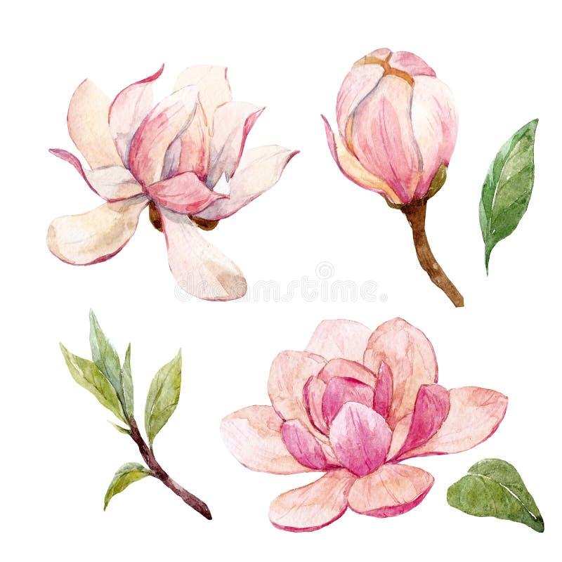 Composición floral de la magnolia de la acuarela ilustración del vector