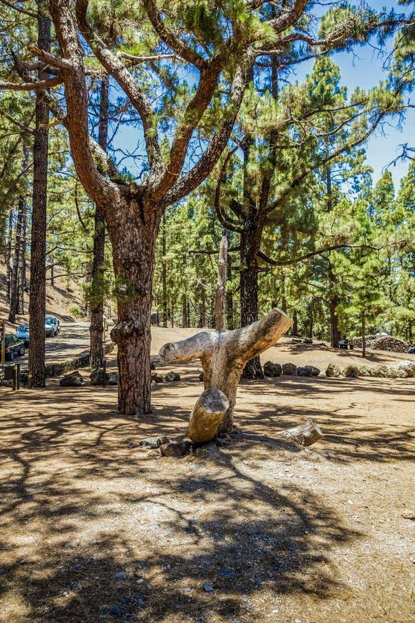 Composición natural de la diversión de un pino de varias capas y de un tronco de árbol seco Comida campestre y barbecuearea dentr fotos de archivo