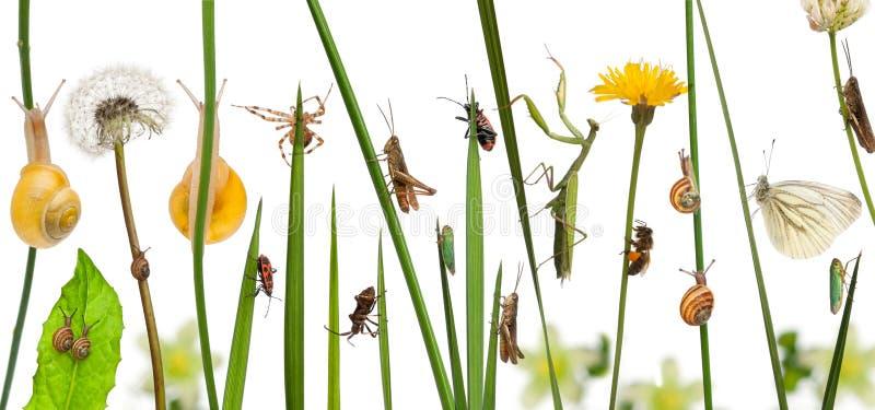 Composición pastoral de flores y de insectos delante del fondo blanco fotografía de archivo libre de regalías