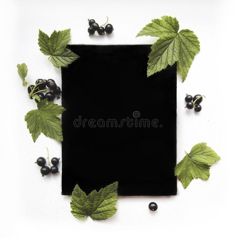 Composición plana de la endecha para la mofa para arriba con la grosella negra y la hoja de papel negra libre illustration
