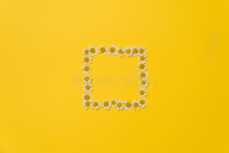 Composición plana en el lecho con flores gamomile sobre fondo amarillo fotografía de archivo libre de regalías