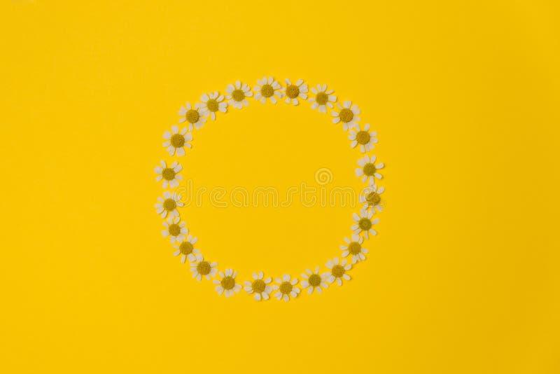 Composición plana en el lecho con flores gamomile sobre fondo amarillo fotos de archivo libres de regalías