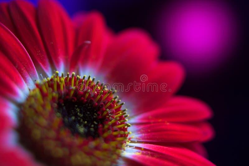 Composición roja 1. de la flor. imágenes de archivo libres de regalías