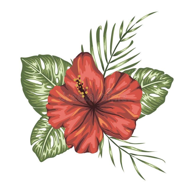 Composición tropical del vector del hibisco rojo ilustración del vector