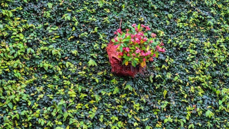 Composición verde de la planta de la pared imágenes de archivo libres de regalías