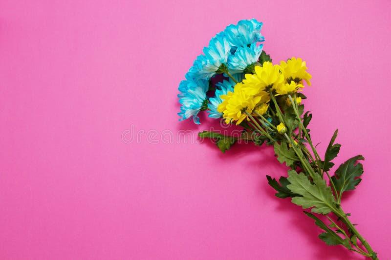 Composici?n amarilla y azul de las flores del verano aislada en fondo rosado D?a de la madre y de las mujeres Concepto de los d?a imagenes de archivo