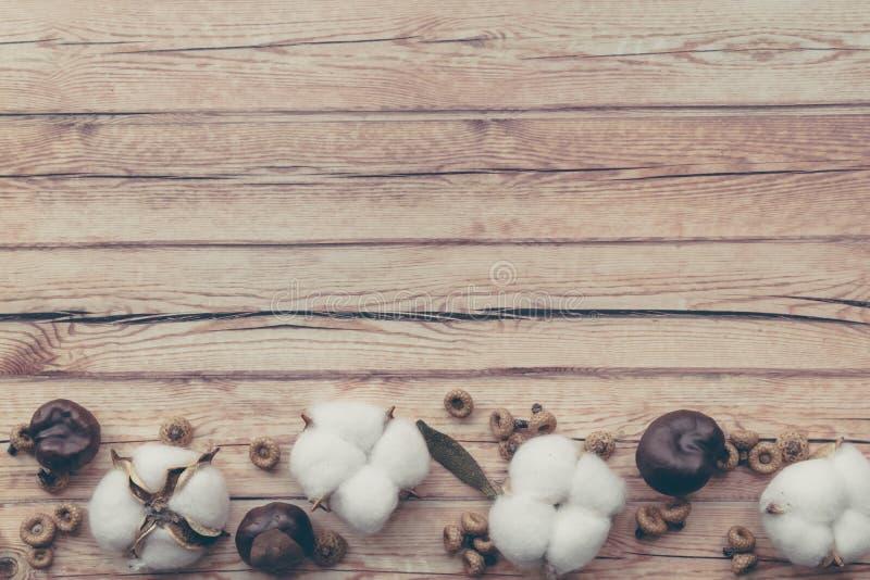 Composici?n del oto?o Opini?n superior secada de la flor mullida blanca del algod?n sobre la madera blanca con el espacio de la c foto de archivo