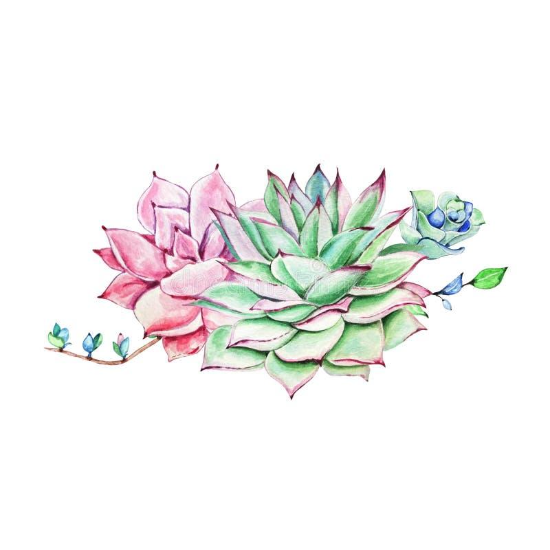 Composici?n del succulent de la acuarela libre illustration