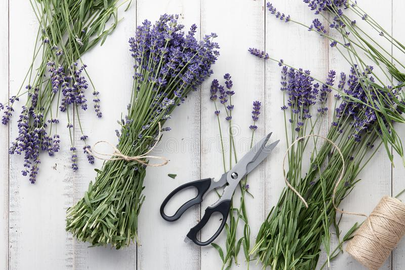 Lavender flowers bouquet on white wooden planks. Composing and binding beautiful lavender flowers bouquet on white wooden planks background, top view stock photo