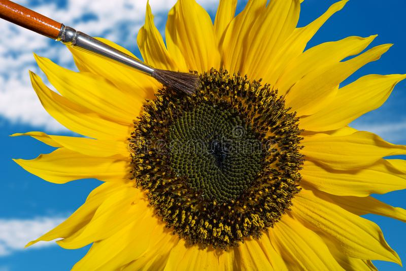 Composing of a hand pollinating a sunflower with a brush.  stock photos