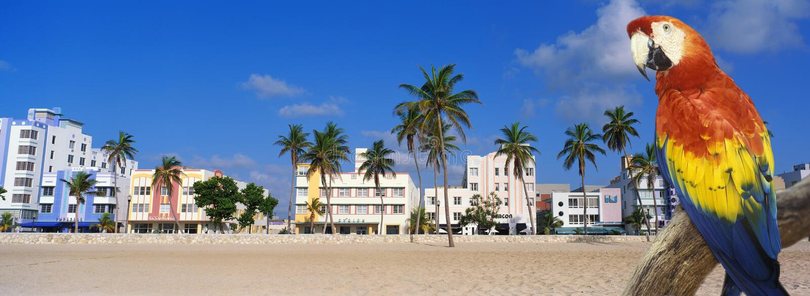 Composite panoramic image of a colorful parrot and coastline in Miami Beach, Florida royalty free stock photo