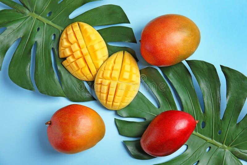 Composition étendue plate avec les mangues et les feuilles mûres de monstera photos stock