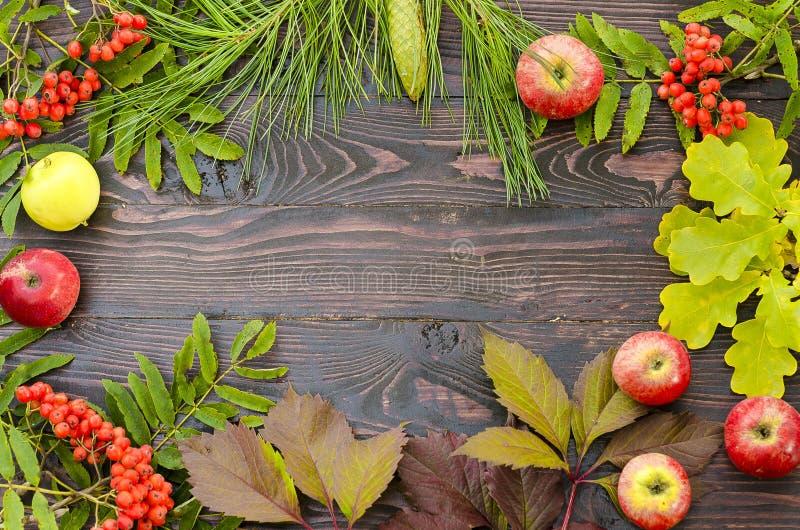 Composition étendue plate d'automne des feuilles, des baies et des pommes sur un fond en bois avec l'espace de copie pour le text images stock