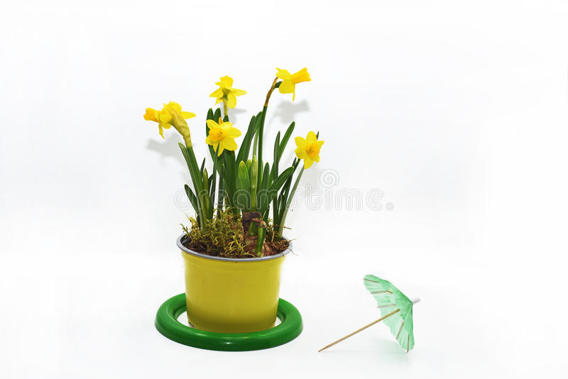 Composition abstraite des jonquilles jaunes photos stock