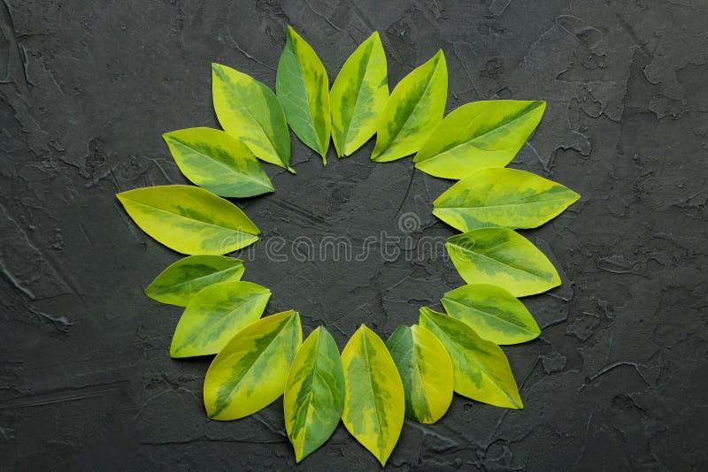 Composition abstraite en été Vue pour le texte de belles feuilles vertes sur un fond noir concret Vue sup?rieure Endroit gratuit image stock