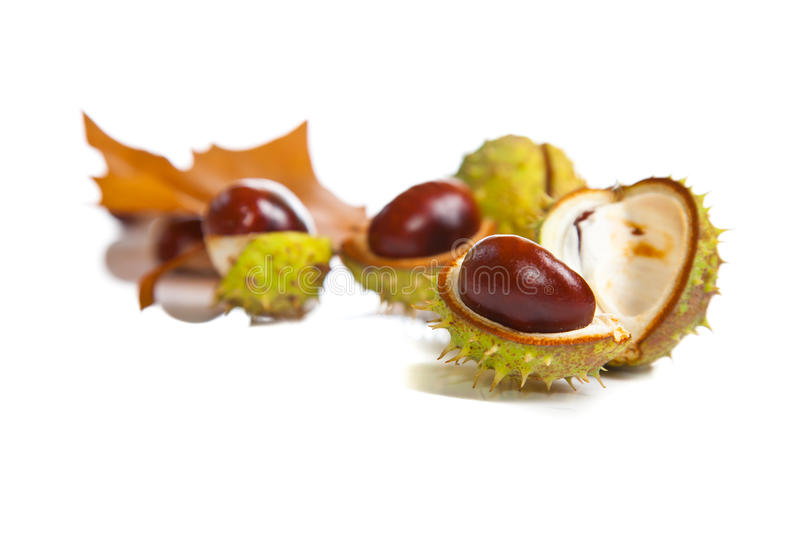 Download Composition Of Autumn Chestnuts And Leaves Stock Image - Image: 16129035