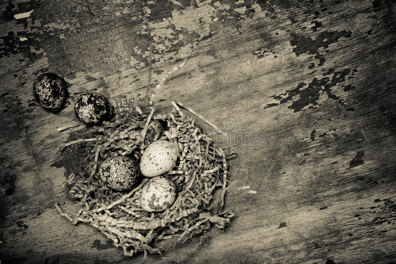 Composition avec des oeufs de caille E son photos libres de droits