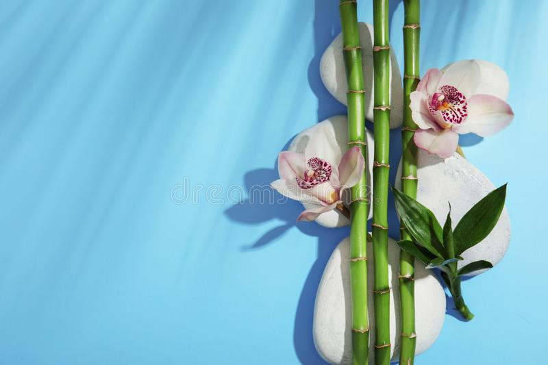 Composition with bamboo branches, flowers and spa stones on color background, top view royalty free stock image