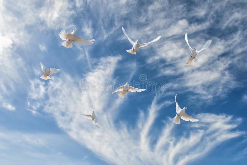 Composition of beautiful white doves in a blue sky stock image