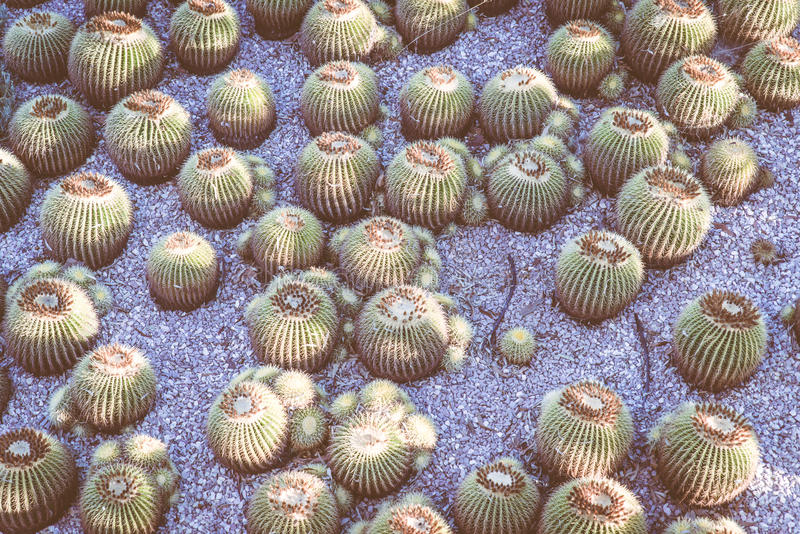 Composition with cactus,. Still life concept about nature stock photography