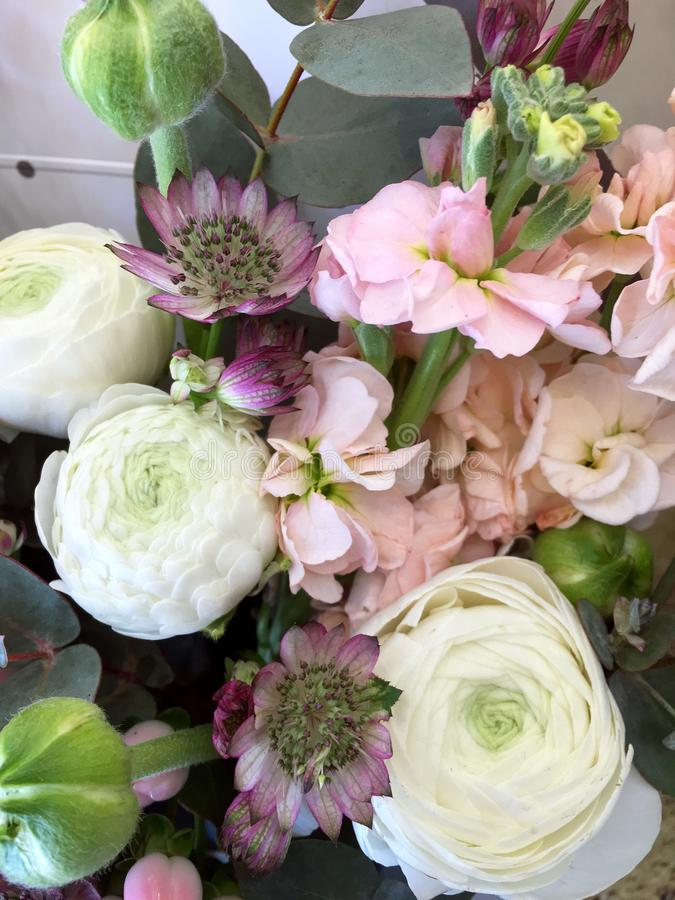 Composition with Colorful. Flowers pink matthiola, white Ranunnculus, eucalyptus, Astrantia. Flowers close up isolated on stock photos