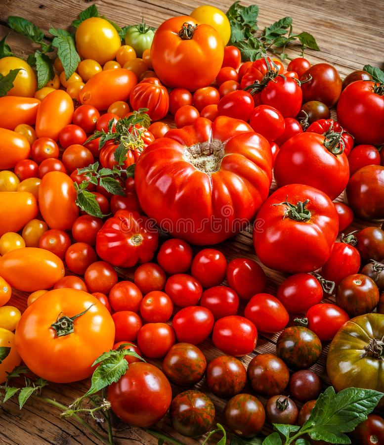 Colorful organic tomatoes royalty free stock images
