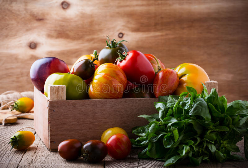 Composition of colorful tomatoes in summer harvest time royalty free stock image