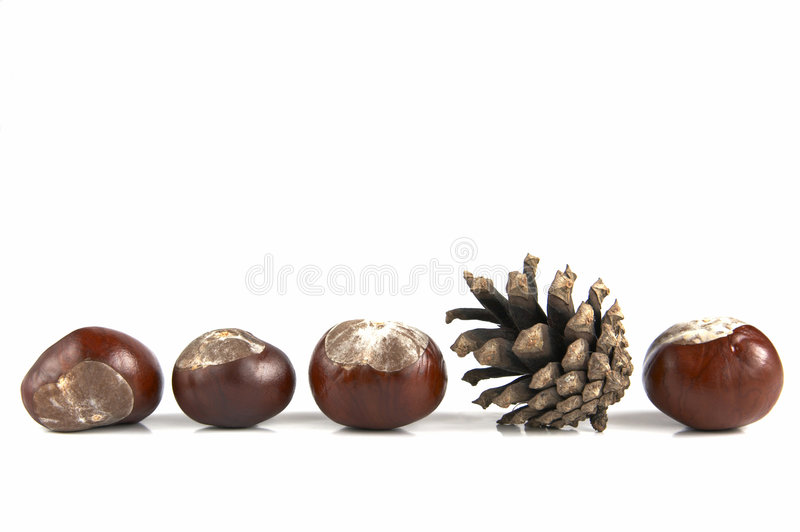 Composition of cone and chestn royalty free stock photos