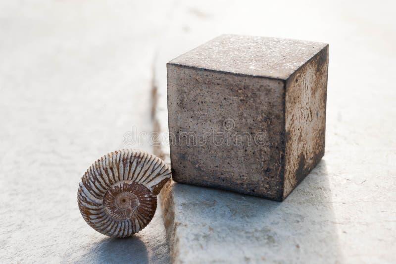 Composition contemplative en Nautilus fossile photos stock